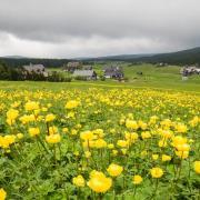 Novinky z Jizerek na měsíc květen, autor: Štěpán Hašek